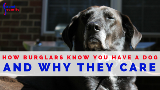 How Burglars Know You Have a Dog and Why They Care