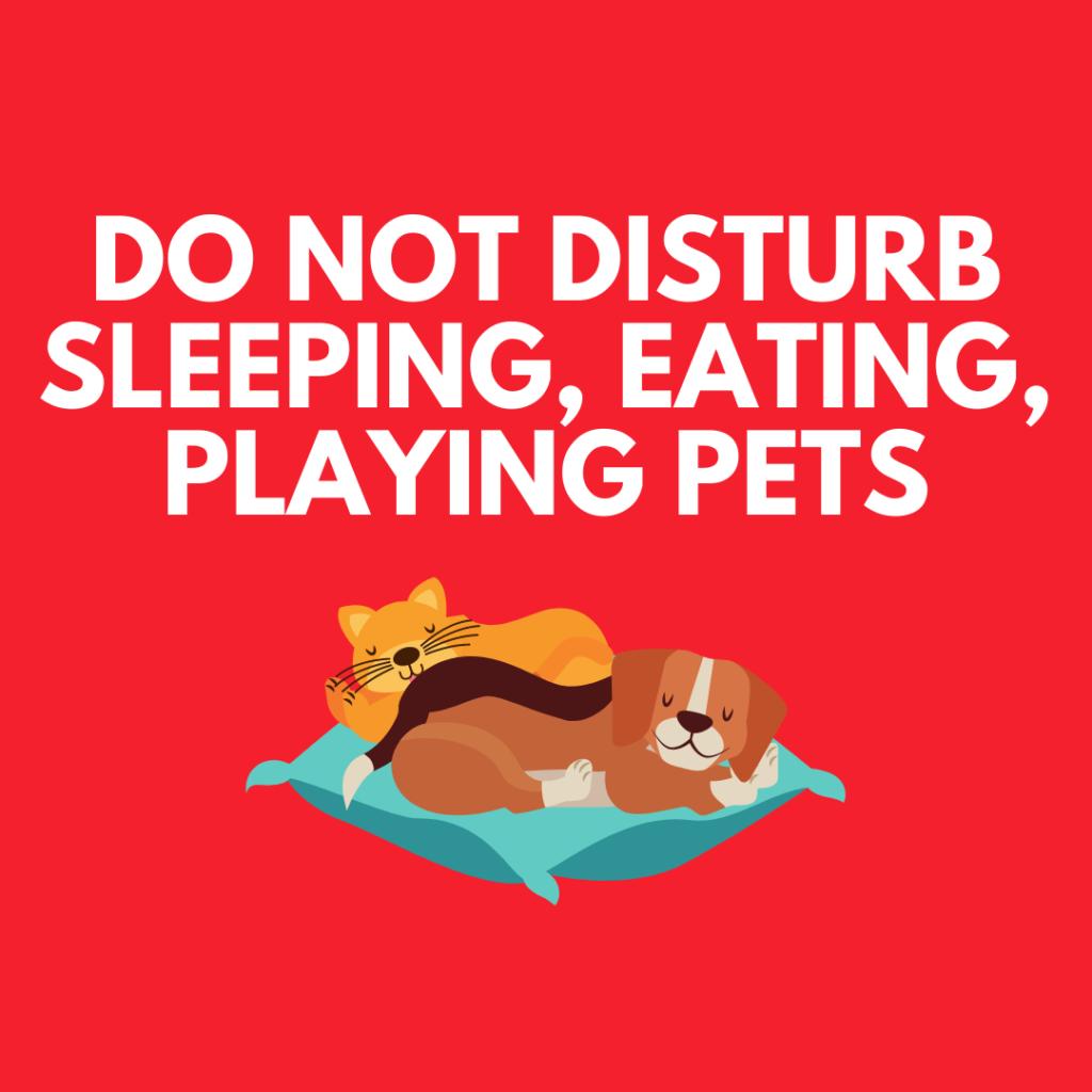teach child not to disturb pet